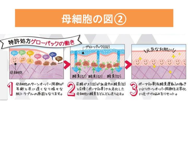 母細胞の図